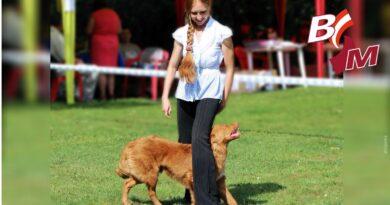 Der Hund als Tanzpartner