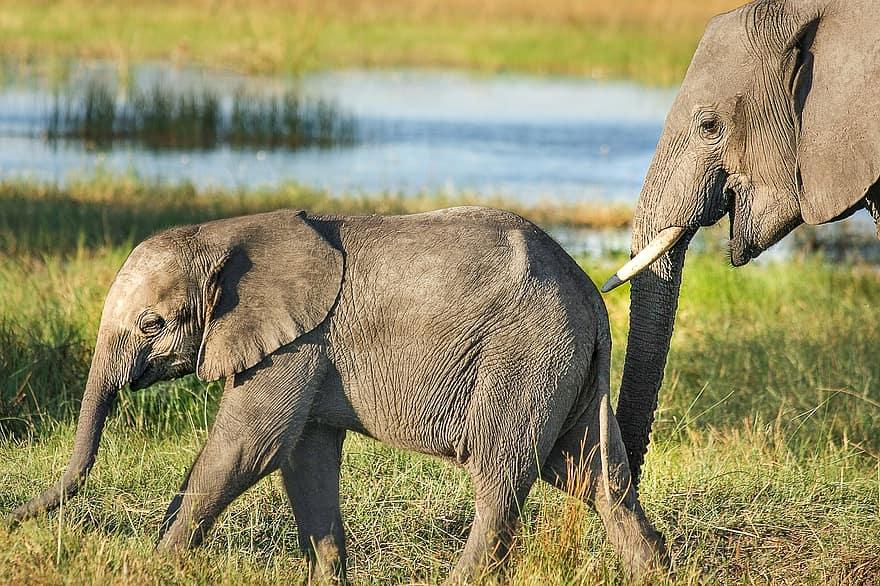 Eine Elefantenkuh stupst ihr Junges